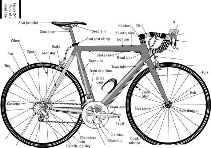 Gross Anatomy: Identifying the Parts of a Bike